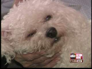 Dog attacks 91-year-old and her pet dog, Muffin