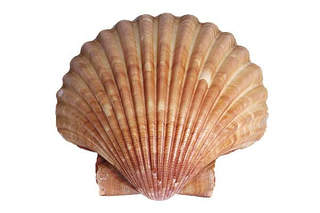 Scalloping seasons served up with warning