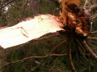 hernando_weather_damage