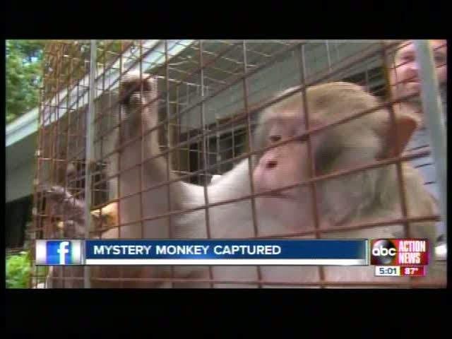 Mystery Monkey In Jail
