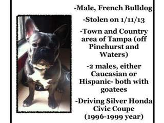 Missing Dog Flier