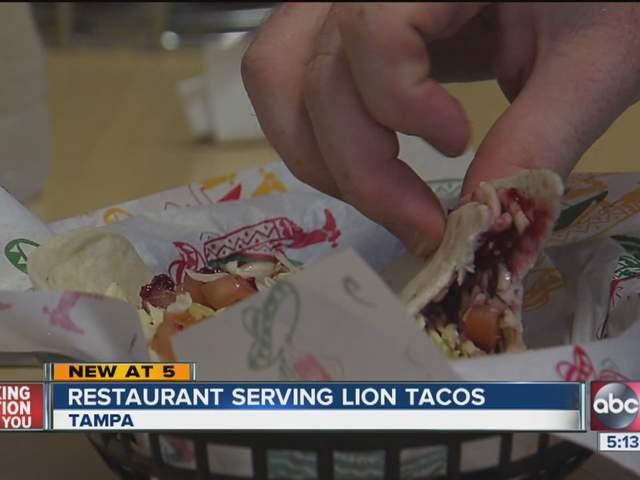 Lion meat taste - photo#22