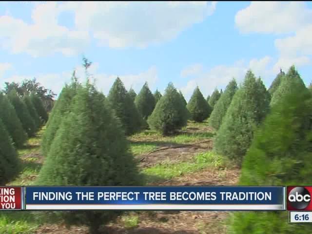 Green Acres Christmas Tree Farm Home Design Inspirations - Bay Area Christmas Tree Farms