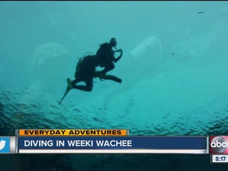 Everyday Adventure: Diving at Weeki Wachee