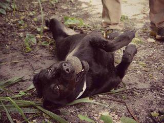 Judge: Padi the dog won't face euthanization