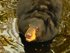 FWC votes to postpone bear hunting in 2016