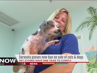 Pet stores can't sell cats, dogs in Sarasota Co.