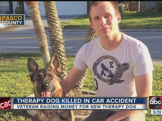 Army veteran's therapy dog killed in accident