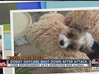Illegal doggy daycare closed in Bradenton