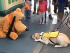 Guide dog gets a little 'Goofy' meeting Pluto