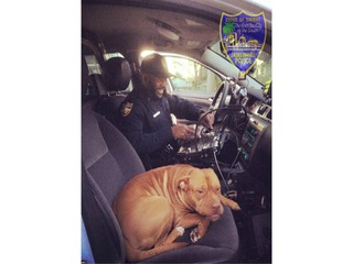 Police officer gets an unexpected furry friend
