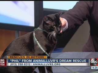 RESCUES IN ACTION: Feb. 13, 2016: Meet Phil
