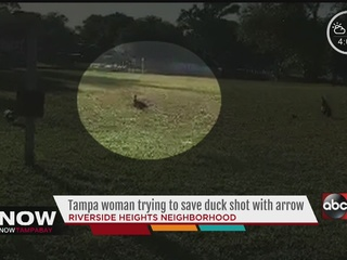 Woman trying to save duck with arrow through it