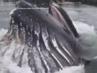 Humpback whale surprises onlookers in Alaska