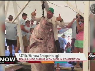 What a catch: 347 lb. Warsaw Grouper caught