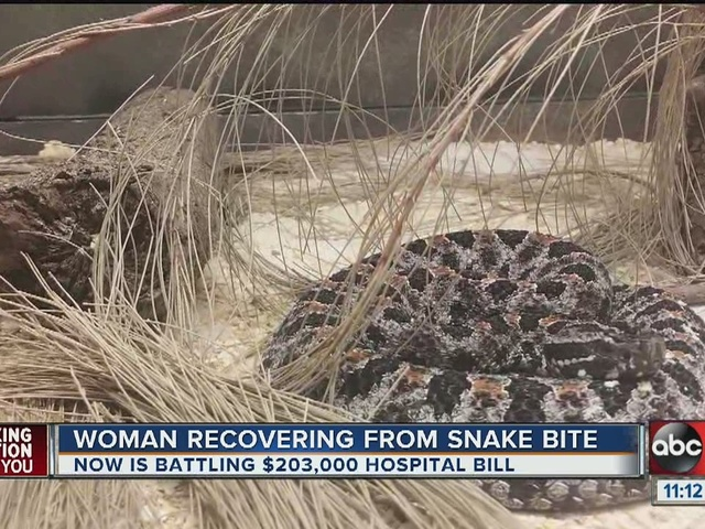 Woman steps on rattlesnake walking out her front door