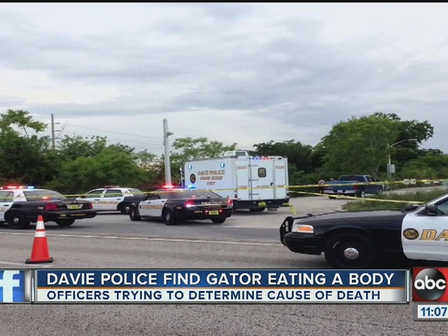 Davie police find gators eating body in Florida canal