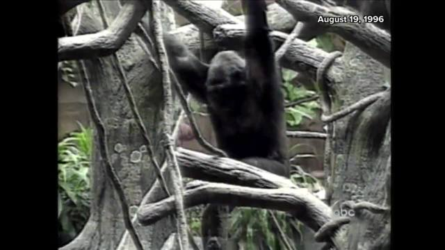 Witness At Cincinnati Zoo Speaks Out About Gorilla Shooting