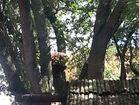Orangutan escapes enclosure at Busch Gardens