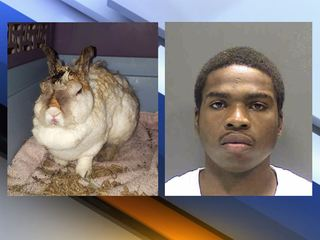 Man convicted for intentionally burning rabbit