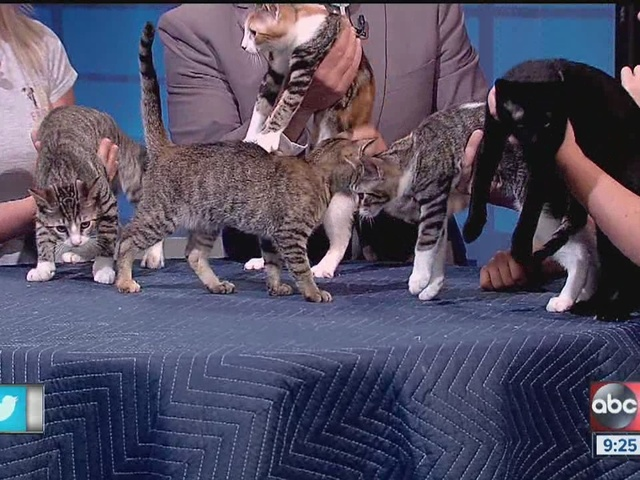 Five cuddly kittens seek forever homes