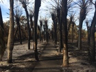 EXCLUSIVE: First look at Egmont Key fire damage