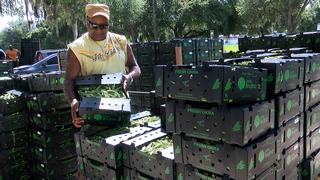Church giving away free, fresh produce 3x a week
