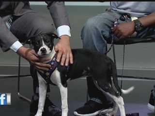 Aug. 28 Rescues in Action: Meet Oreo