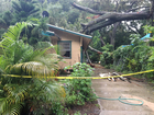 Tree falls onto house in Seminole Heights