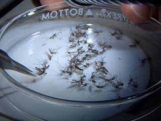 $25 million state funds authorized for Zika