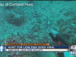 Man uses gun to hunt lionfish underwater