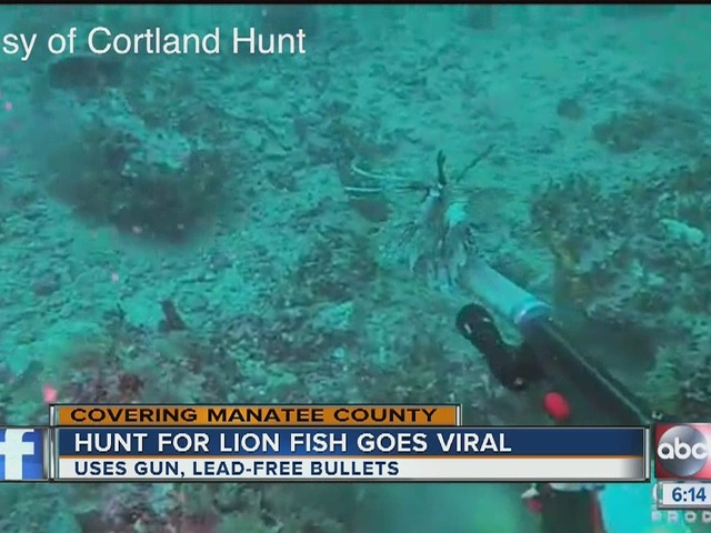 Hunt for Lionfish with gun goes viral