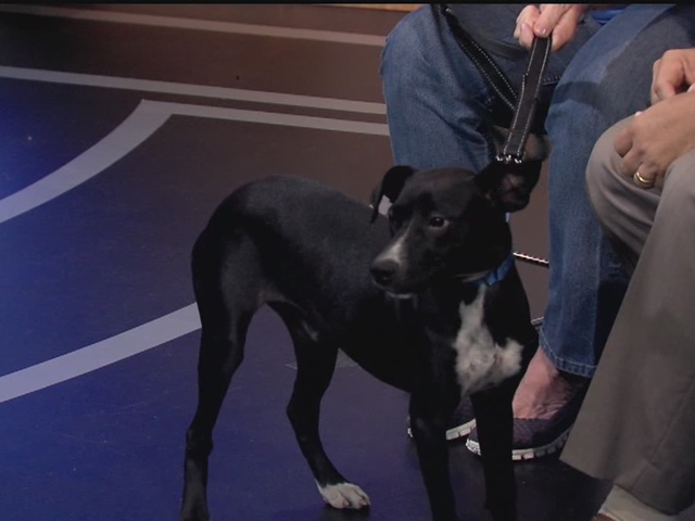 Pet of the week: Diana is a sweet 10-month-old hound mix searching for a…