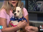 Meet Roxy, our Sept. 24 Rescues in Action star