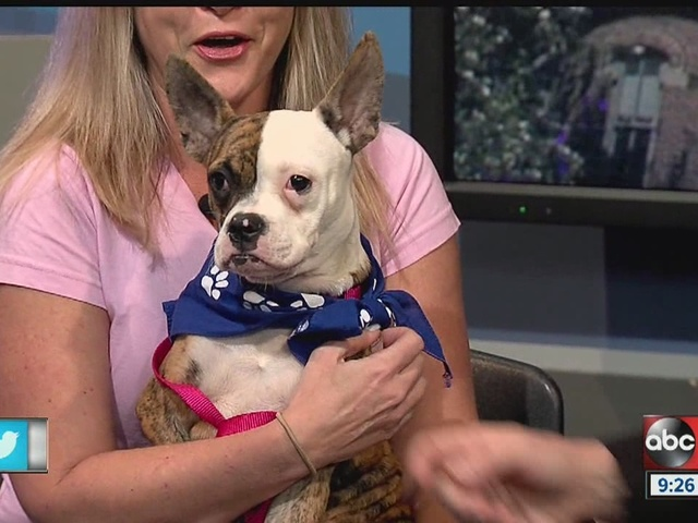Sept. 24 Rescues in Action: Meet Roxy