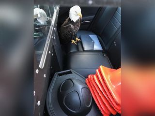 State trooper goes extra mile to rescue eagle