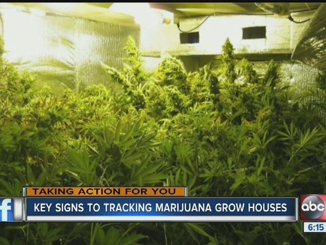Key signs to tracking marijuana grow houses