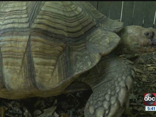 Tortoise missing for nearly 3 months returns home