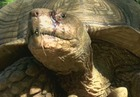 Tortoise missing for 3 months returns home