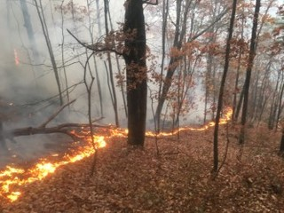 Fla rangers issue wildfire warning for Tampa Bay