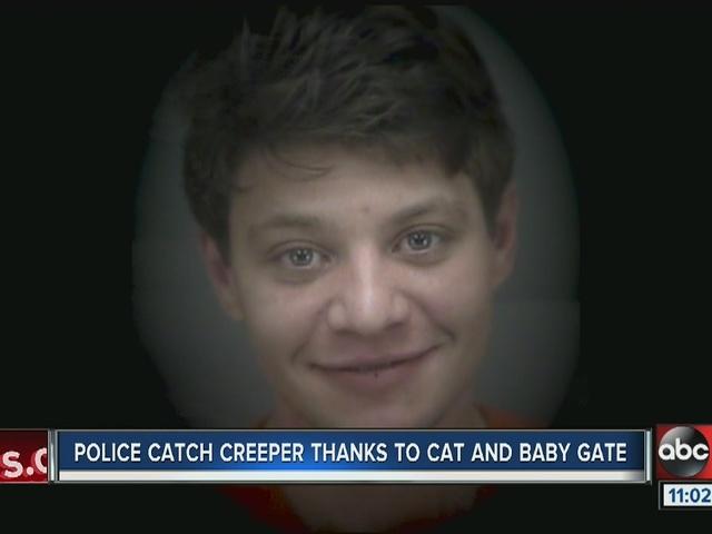 Burglar breaks into St. Pete mom's home to pet the family cat