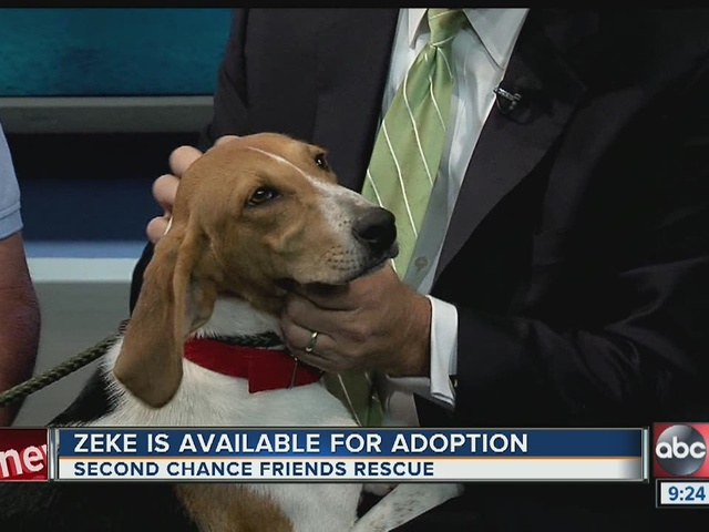 Pet of the week: Zeke is an energetic 8-month-old Hound/Trotter mix that…