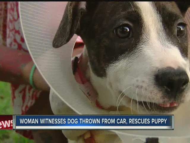 Woman saves dog after it was thrown from moving van