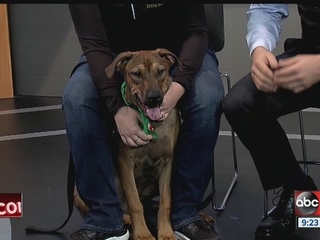 Meet Jasper, Saturday's Rescues in Action star