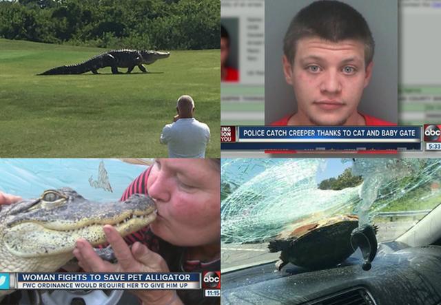 2016 Florida headlines that left us speechless