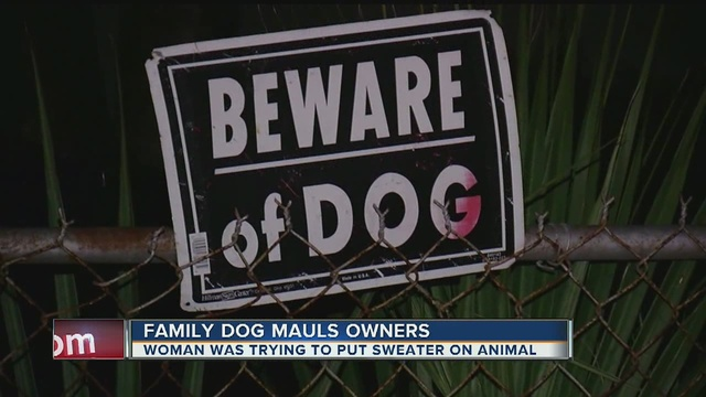 Pit bull mauls family after owner tries to put sweater on him