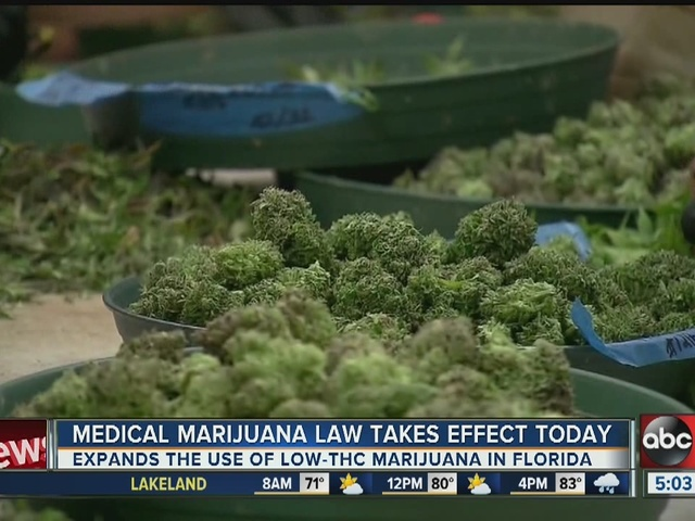 Florida's medical marijuana law now in effect - Story