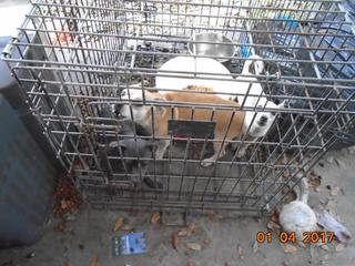 11 dogs seized after animal cruelty arrests