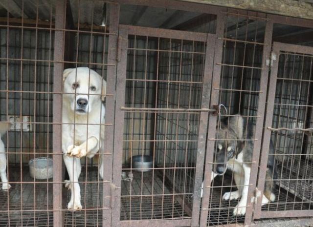 South Bay Area Dog Adoption