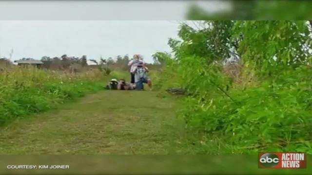 Video shows giant gator meandering across path at Polk County preserve